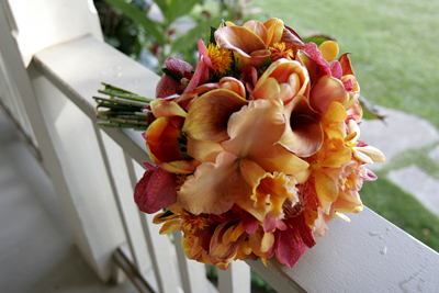 orange and peach orchids