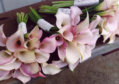 cluster of pale pink mini calla lilies for Maui wedding
